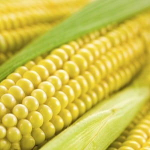 Syngenta corn lawsuits
