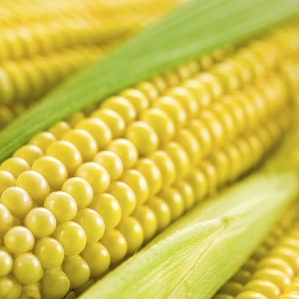 GMO corn lawsuits