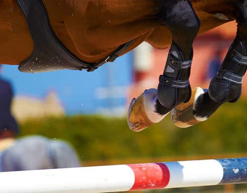 Horse Jumping | Traumatic Head Injury