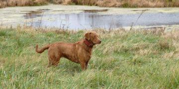 Hunting Dog – GPS Dog Collar Lawsuit