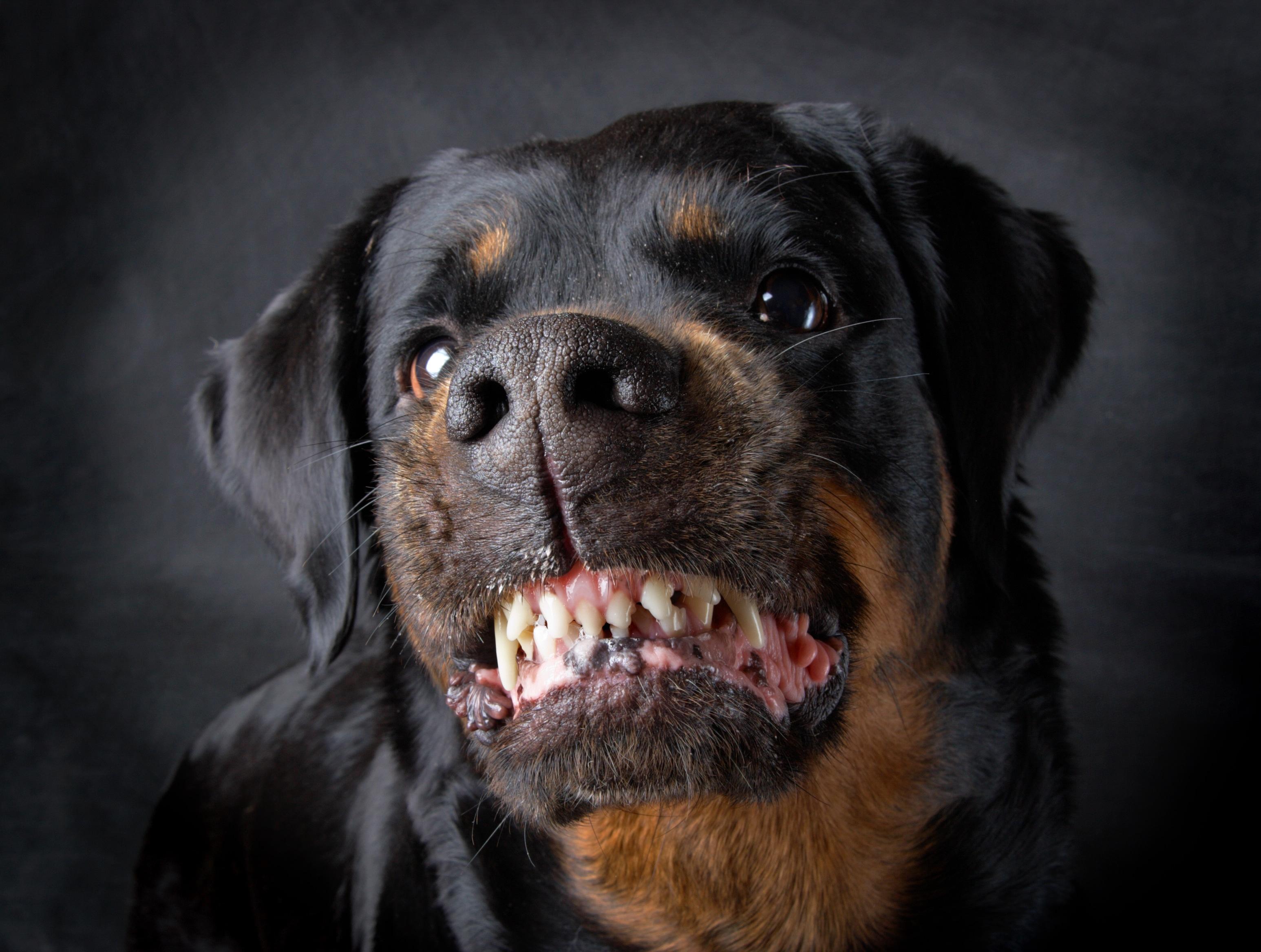 Alabama Personal Injury Dog Bite Lawyers | Dog Bite ...